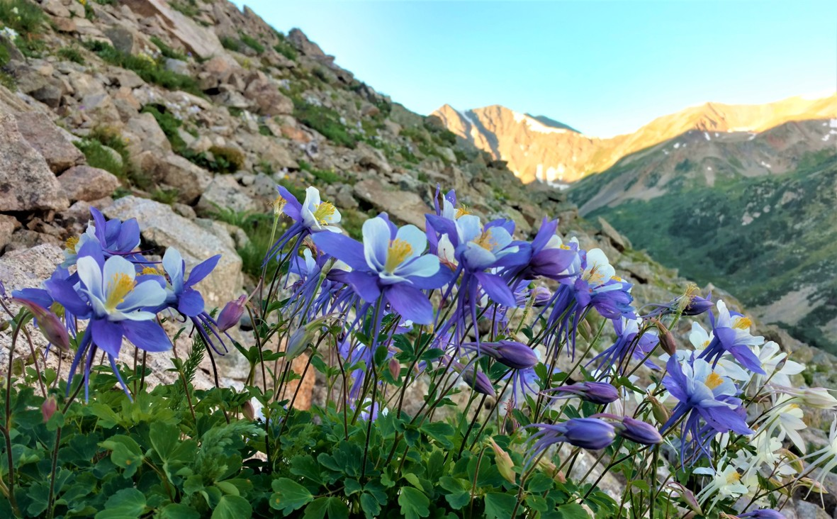 Columbine Photo by Elizabeth Barber 2
